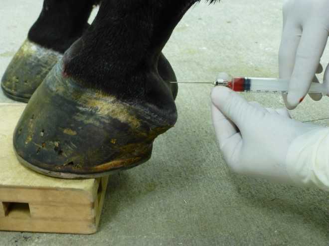 Stem Cell Therapy Mesa Equine